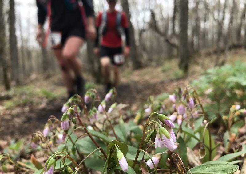 Spring in Bloom - Photo Credit Erik Lindstrom